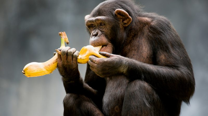 Se pensate che le banane siano roba per scimmie vi sbagliate di grosso! Scopri tutti i segreti.
