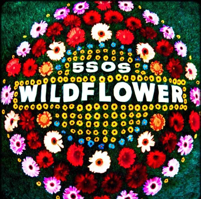 5 Seconds of Summer Wildflower