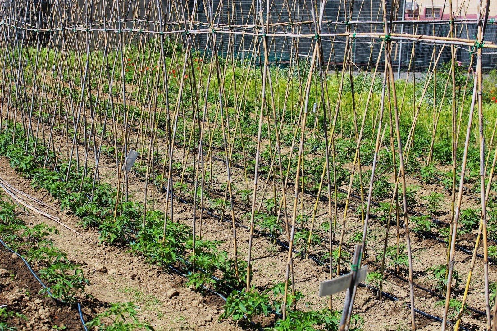 Tutti i lavori da fare nell orto e in giardino nel mese di Giugno
