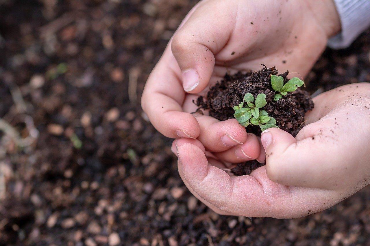 terriccio germogli mani bambino compostabile